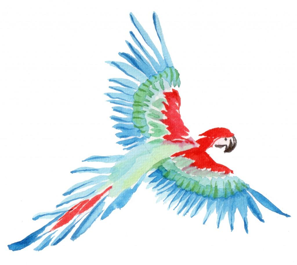 400dpi-DFL-I-vliegende-papegaai